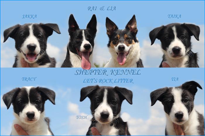 Shepter Mudi & Border Collie Kennel